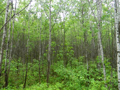 Sawyer Lake Road : Channing : Dickinson County : Michigan