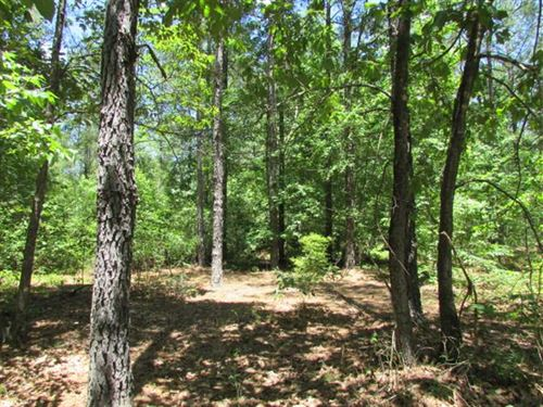 25 Acres of Hunting Land And Home : Ellaville : Schley County : Georgia