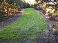 Outstanding 165 Acre Hunting Tract : Manning : Clarendon County : South Carolina