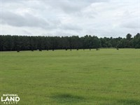 Turn-Key Cattle Ranch With Timber : Holcomb : Grenada County : Mississippi