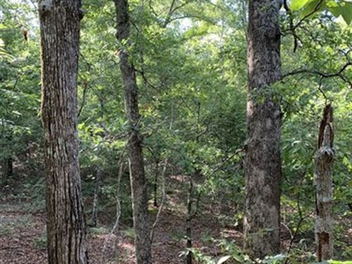 52 Acre Hunting Recreational Tract : Butler : Marion County : Georgia