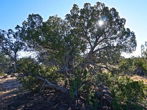 Cheap Arizona Land Sale : St Johns : Apache County : Arizona