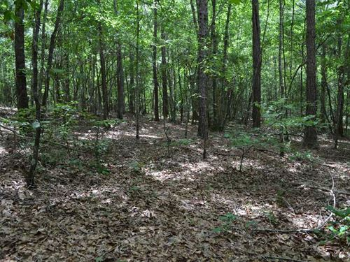 24 Acres in Pike County, Alabama : Curry : Pike County : Alabama