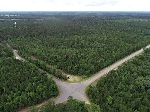 Pine Timberland County Road : Chidester : Ouachita County : Arkansas