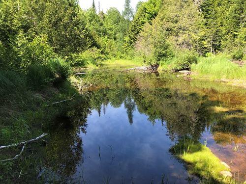 Recreational Timber Lot in Maine : Mattawamkeag : Penobscot County : Maine