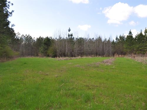 209 Acres, Hale County, Sawyerville : Sawyerville : Hale County : Alabama
