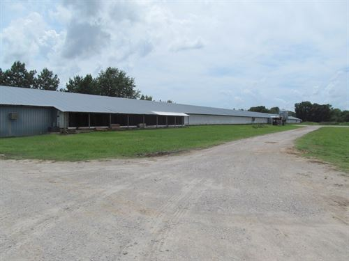 Poultry Farm, East Texas, Gilmer : Gilmer : Upshur County : Texas