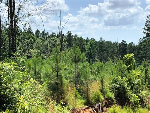 Silverman Tract-Sealed Bid Sale : McKenzie : Henry County : Tennessee