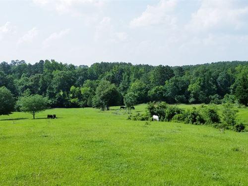 Hilltop Views, Natural Spring Creek : Palestine : Anderson County : Texas