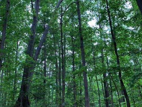 Lexington Timber Investment/Hunting : Lexington : Henderson County : Tennessee