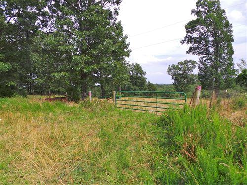 Fenced/Cross-Fenced Pasture Bull : Yellville : Marion County : Arkansas