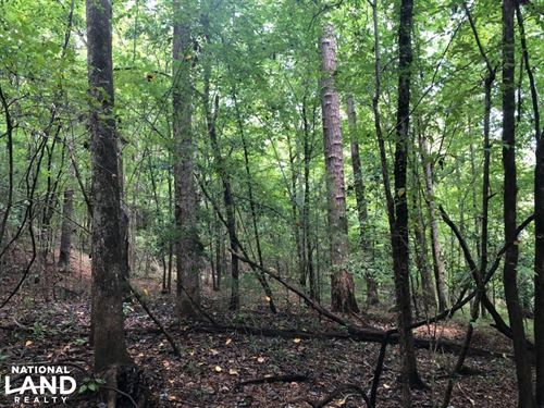 Evergreen Hunting/Timberland Invest : Evergreen : Conecuh County : Alabama