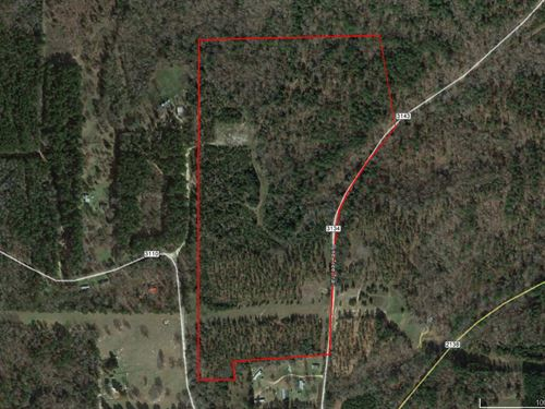 Nice Wooded 67 Acres : Jacksonville : Cherokee County : Texas