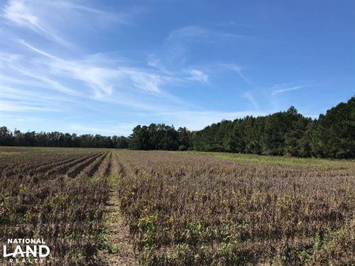 Hwy 261 Home Site : Hemingway : Williamsburg County : South Carolina