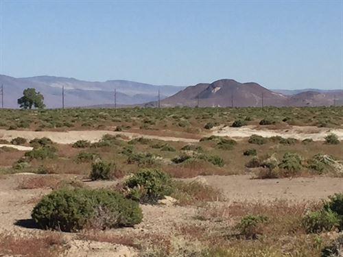 493 Acres Near Tric, Auction : Fallon : Churchill County : Nevada