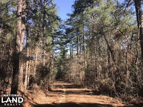 Mature Natural Timber Stand Near Na : Carthage : Leake County : Mississippi