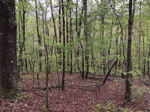 7.5 Acres Of Mountain Land, Stream : Talking Rock : Gilmer County : Georgia