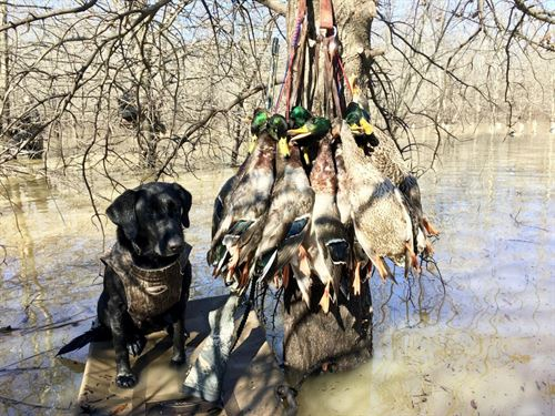 Raft Creek Bottoms : Searcy : White County : Arkansas