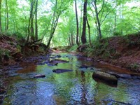 Wolfskin Tract, Loaded With Pine : Lexington : Oglethorpe County : Georgia