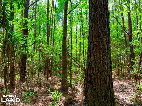 Bates Creek Hunting And Recreationa : Citronelle : Washington County : Alabama