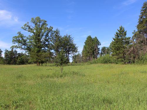 80 Acres Hunting Land Motley : Motley : Cass County : Minnesota