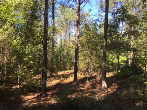 Timber And Hunting Tract Near Troy : Goshen : Pike County : Alabama
