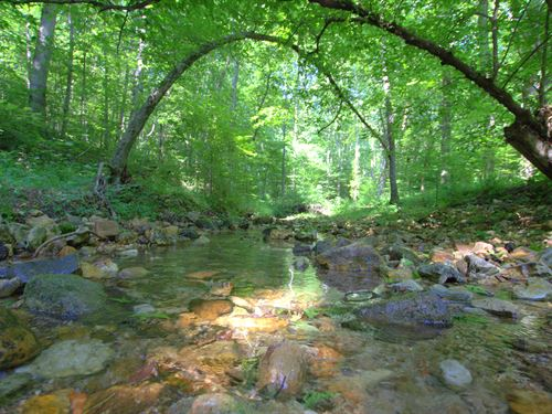 60 Acres Is Tucked In The Valley : Nunnelly : Hickman County : Tennessee