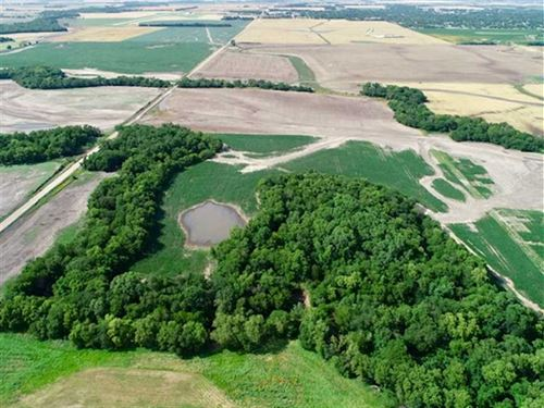 40 Acres of Excellent Hunting : Lyons : Rice County : Kansas