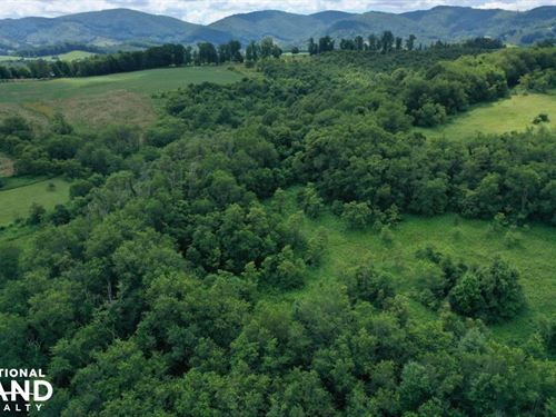 Sparta Timber And Hunting Tract : Sparta : Alleghany County : North Carolina