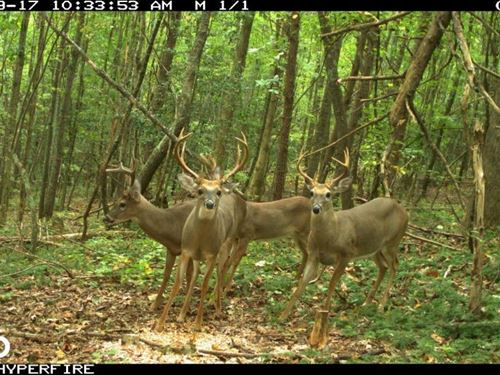 Statesville Hunting And Timber Trac : Statesville : Iredell County : North Carolina