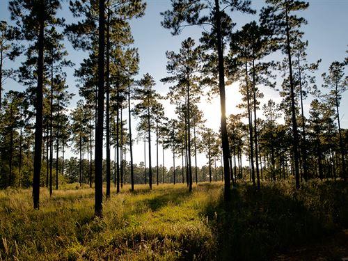Slater Plantation : Ridgeland : Jasper County : South Carolina
