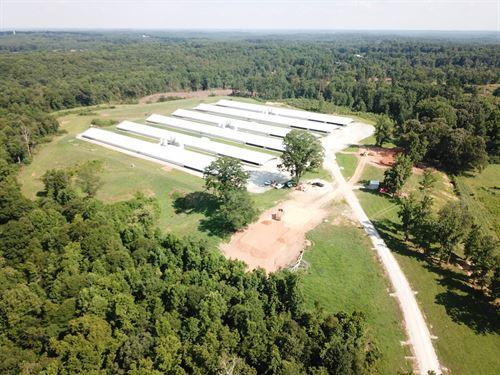 Ridgeback Farm Poultry : Homer : Banks County : Georgia