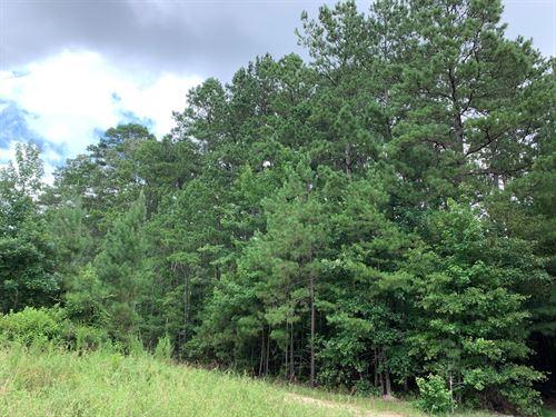 Large Pine Hunting Land Union : El Dorado : Union County : Arkansas