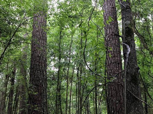 Recreational Pine Timber Land West : El Dorado : Union County : Arkansas