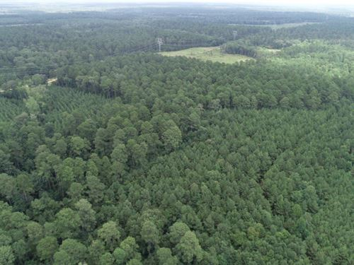 Natural Pine Timber Land Western : Mount Holly : Union County : Arkansas