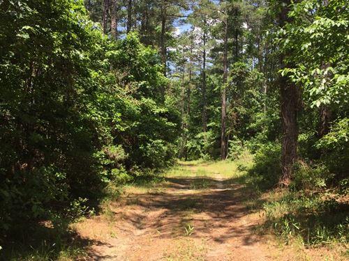 Rural Pine Timber Hunting Land : Stephens : Columbia County : Arkansas