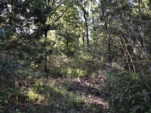 21 Wooded Acres : Centerville : Leon County : Texas
