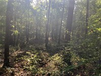 5 Acres With Electric, Phone, WA : McRae : White County : Arkansas