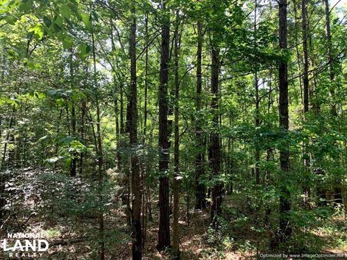 Hunting Land With Small Crop Acreag : Kosciusko : Attala County : Mississippi