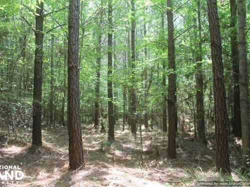 43 North Pine Plantation : Kosciusko : Attala County : Mississippi