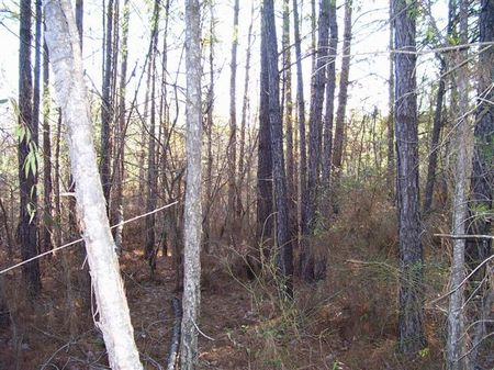 197 Acres : Kosciusko : Attala County : Mississippi