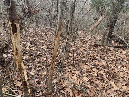 Dismal Timber : Gillett : Arkansas County : Arkansas