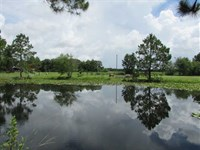 Secluded Home With 15 Acres, Pond : Norman Park : Colquitt County : Georgia