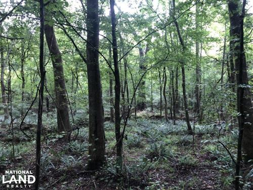 Premier Deer Hunting And Plantation : Hazlehurst : Copiah County : Mississippi