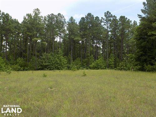 Congaree Ridge : Sandy Run : Calhoun County : South Carolina
