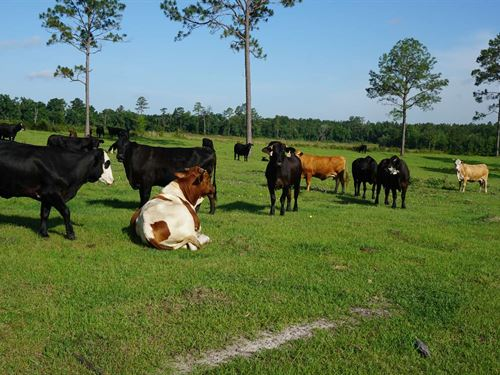 Beautiful 152 Acre Farm : Live Oak : Suwannee County : Florida