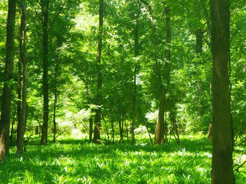 Eureka Landing West Tract : Eliska : Monroe County : Alabama