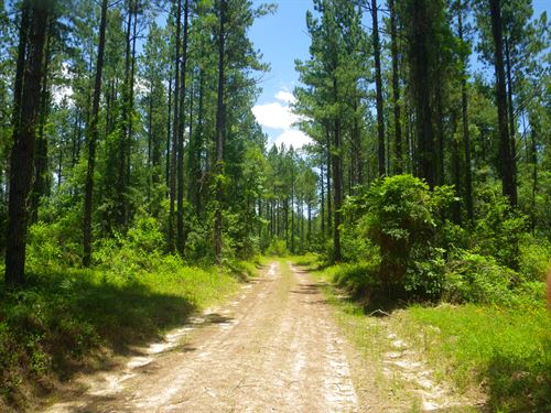 Eureka Landing East Tract : Eliska : Monroe County : Alabama