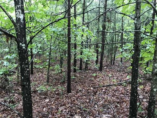 20-Acres of Fantastic Hunting With : Shirley : Van Buren County : Arkansas