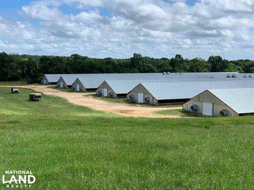Chicken/Cattle Farm Jasper County : Paulding : Jasper County : Mississippi
